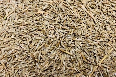 GRASS SEED RED FESCUE 950g